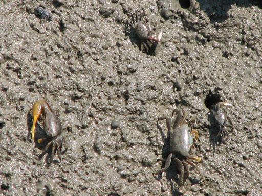 070209_Crabs.jpg