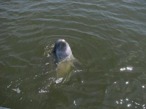 070209_Dolphin2.jpg