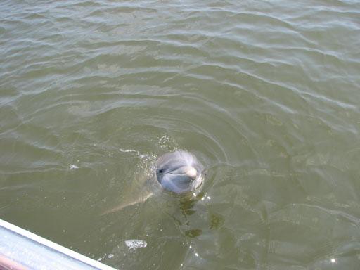 070209_Dolphin3.jpg
