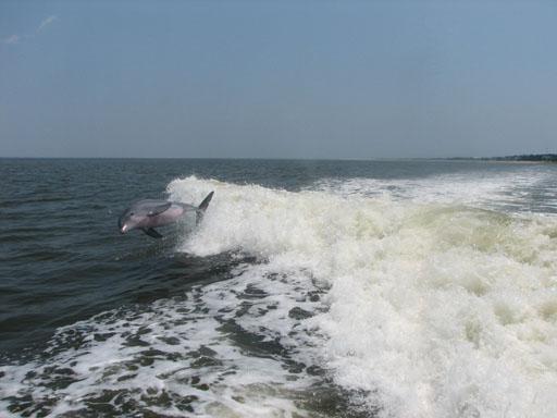 070209_Dolphin4.jpg