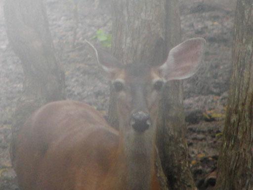 070209_Deer.jpg