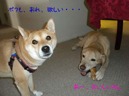 060109_MomoBoneKenta.jpg