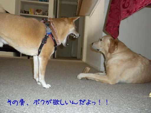 060109_KentaWantsBone1.jpg