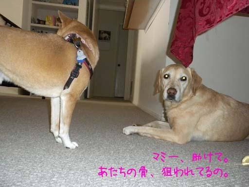 060109_KentaWantsBone3.jpg