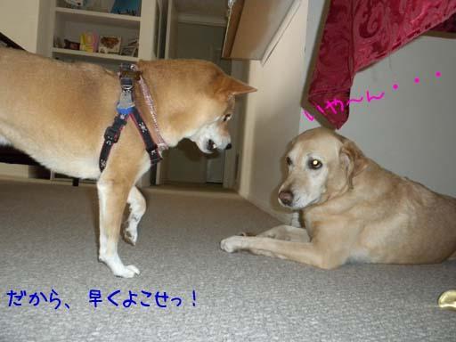 060109_KentaWantsBone4.jpg