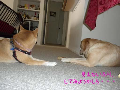 060109_KentaWantsBone6.jpg