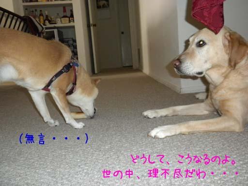 060109_KentaWantsBone7.jpg