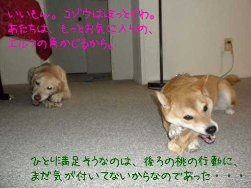 060109_KentaWantsBone8.jpg