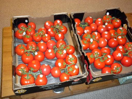 082909_Tomatoes.jpg