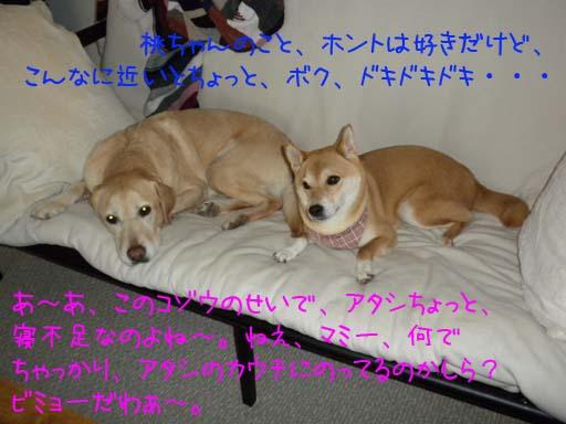 052909_KentaMomoCouch.jpg