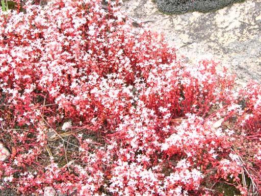 041809_Flower1.jpg